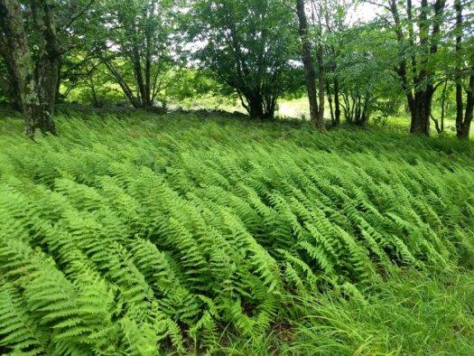 Ferns Blowing