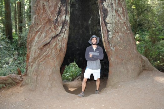 Maybe I can camp in here! - Redwood National Park - Lady Bird Johnson Grove